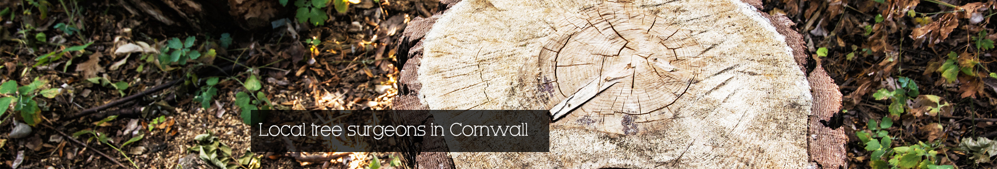 Tree Surgeon Cornwall